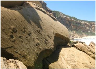 Fossilised elephant tracks near Stilbaai